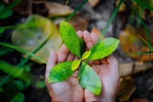 Consumo sustentável: entenda tudo sobre o assunto