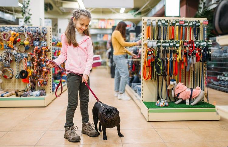 Como montar um Pet Shop: Guia Completo 2020