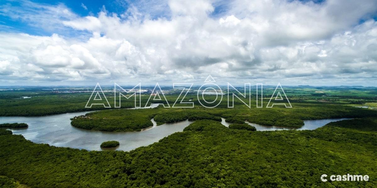Dia da Amazônia: saiba a importância da preservação da maior floresta tropical