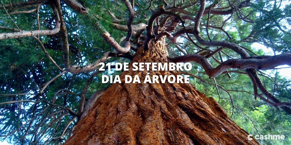 O que significa o Dia da Árvore? E quando é comemorado?