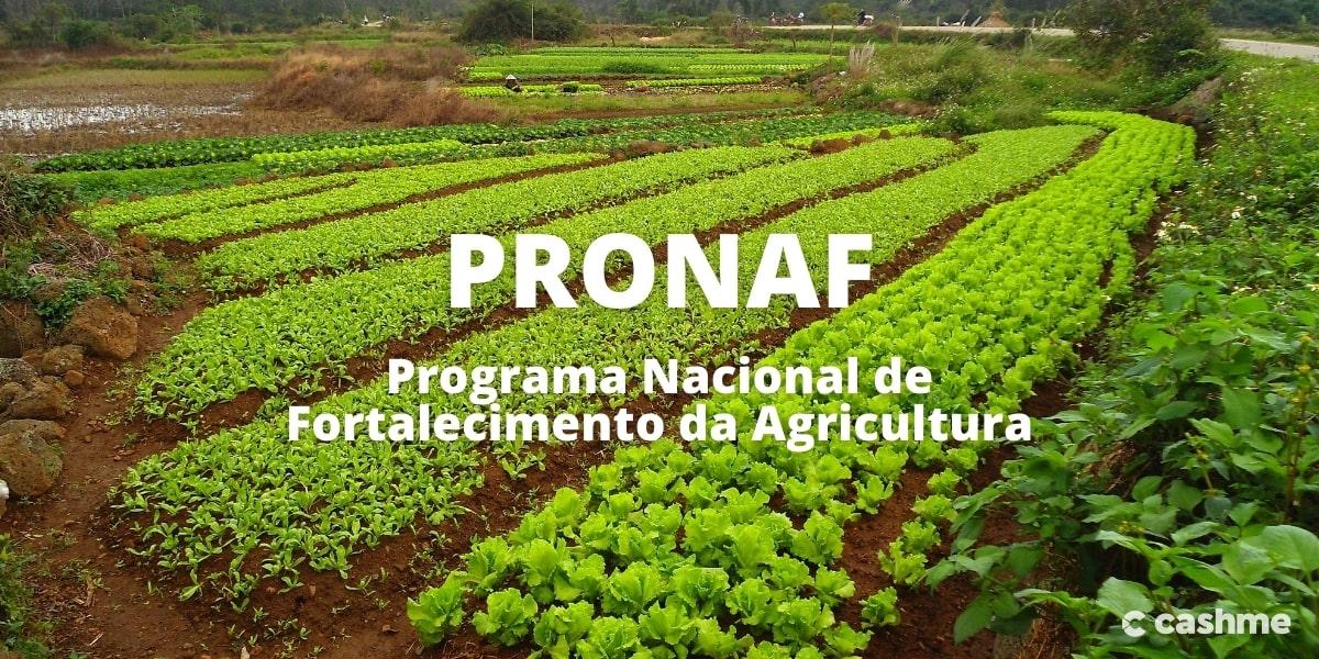 Pronaf: o que é, como funciona e quais são os requisitos